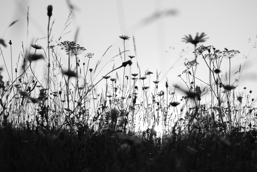 a-hay-meadow-in-the-ghimes-valley-2011