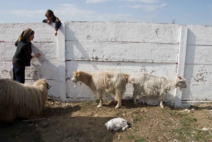 at-the-animal-fair-hateg-2012