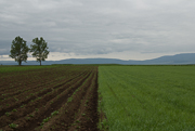 near-csikszentmihaly-2012