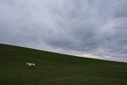 a-horse-near-icland-2013