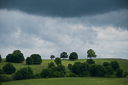 oaks-near-szekelyhodos-hodosa-