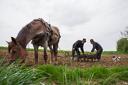 planting-corn-at-nyaradremete-eremitu-