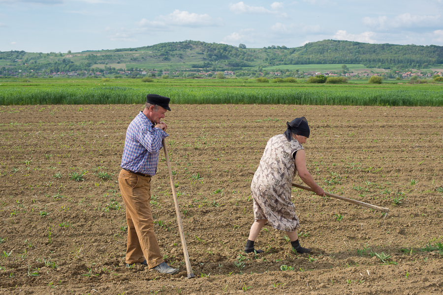elderly-couple-on-the-field-near-harasztkerek-roteni-