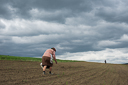 a-couple-working-on-their-land-near-jobbagytelke-sambrias-