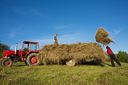 stacking-hay-near-nyaradselye
