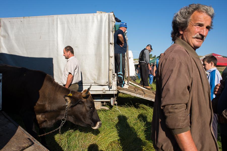 animal-market-at-szekelyhodos-hodosa-