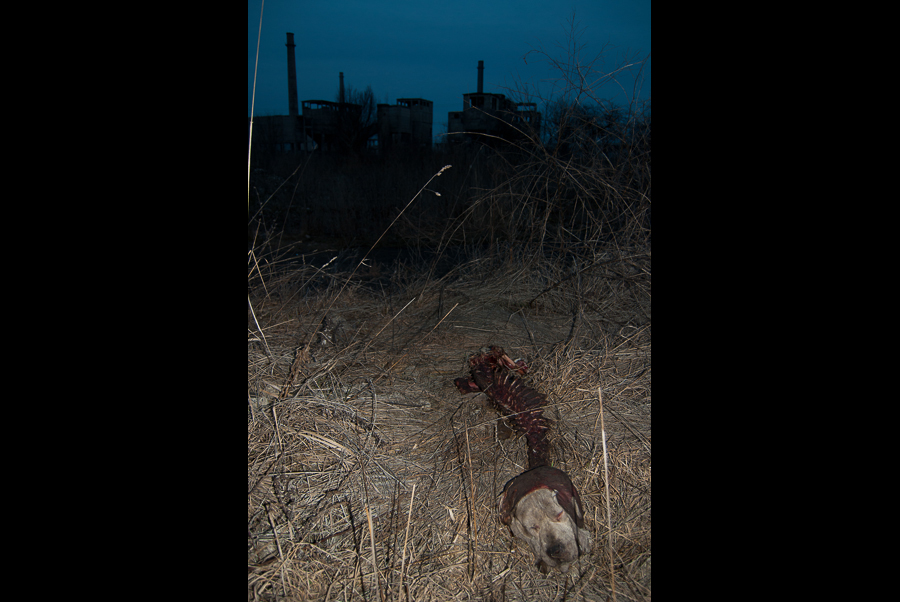 carcass-of-a-dog-among-the-ruins-of-the-calan-steelworks-2009