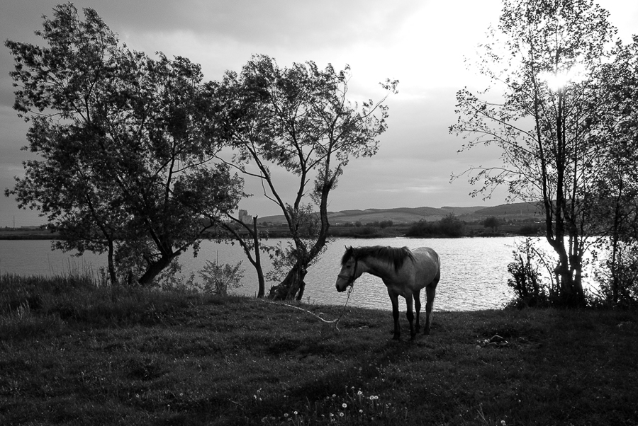 near-sangeorgiu-de-mures-2011