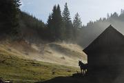 near-sandominic-2008