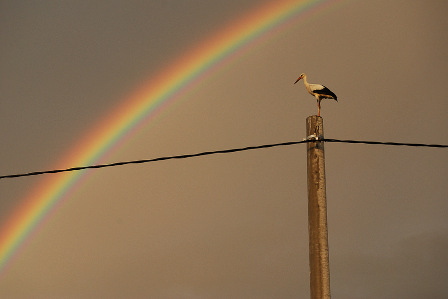 the-celestial-prism-and-a-stork-in-rusi-2011