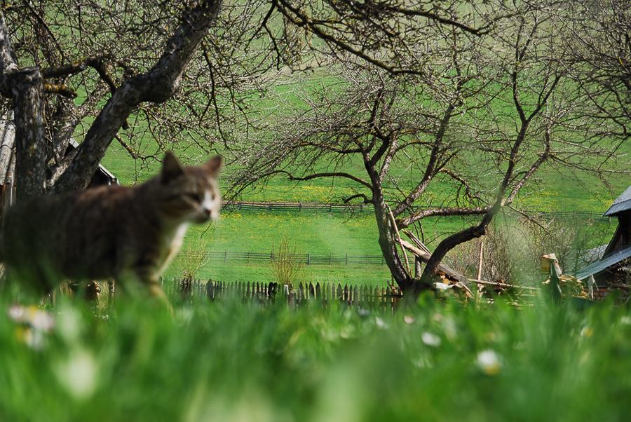 spring-in-a-garden-in-lunca-de-sus-2010