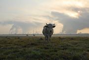 pasture-near-nazna-village-2009