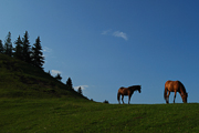 horses-on-a-hilltop-in-the-ghimes-valley-2010